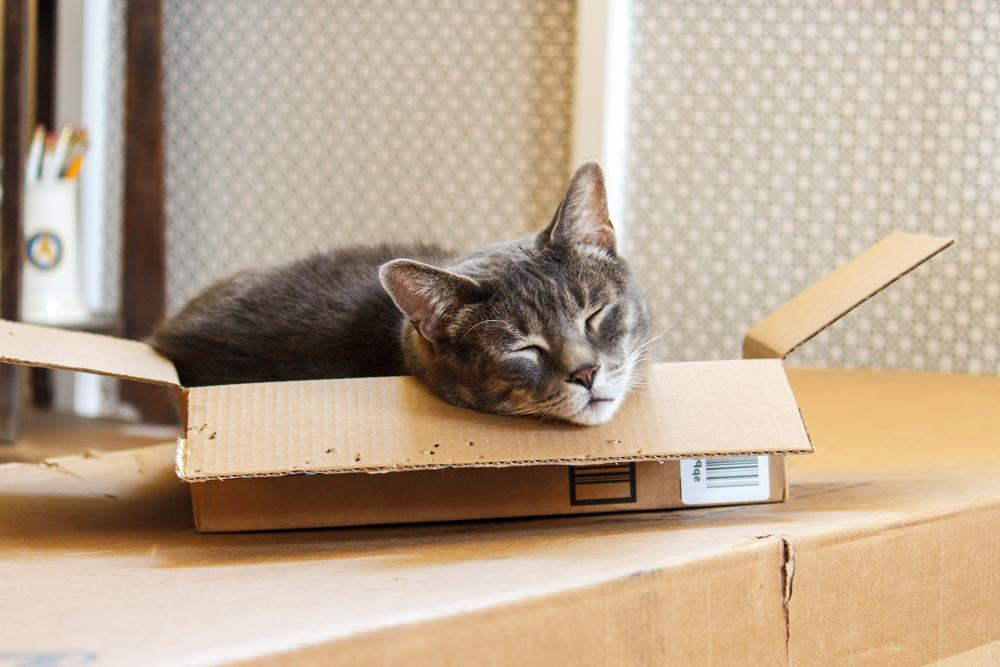 Beginner's Guide to LiteSpeed Cache for Joomla: Cat in a Box